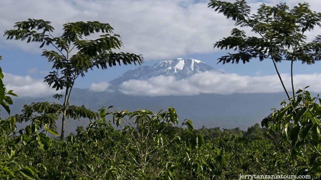 Ecosystem Of Kilimanjaro
