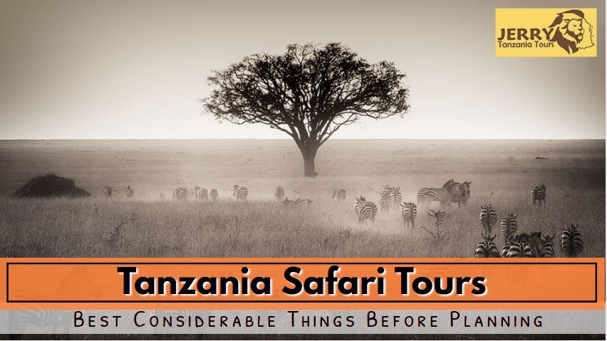 Planning A Safari Trip To Tanzania! Best Considerable Things Before Planning
