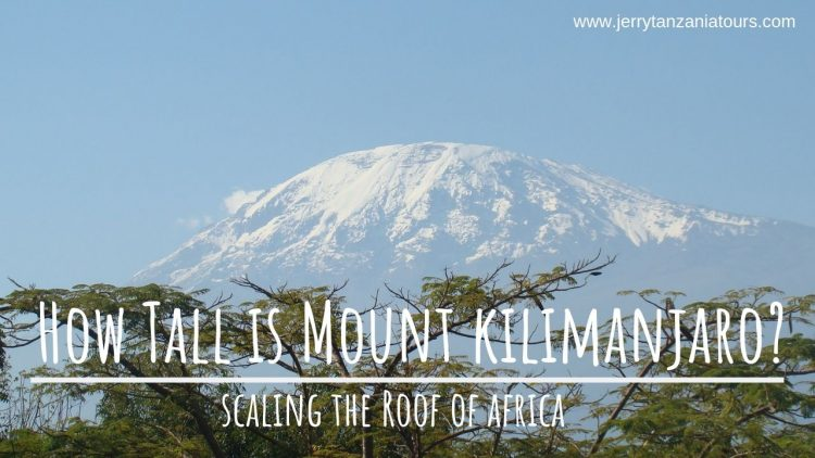 How-Tall-is-Mount-kilimanjaro
