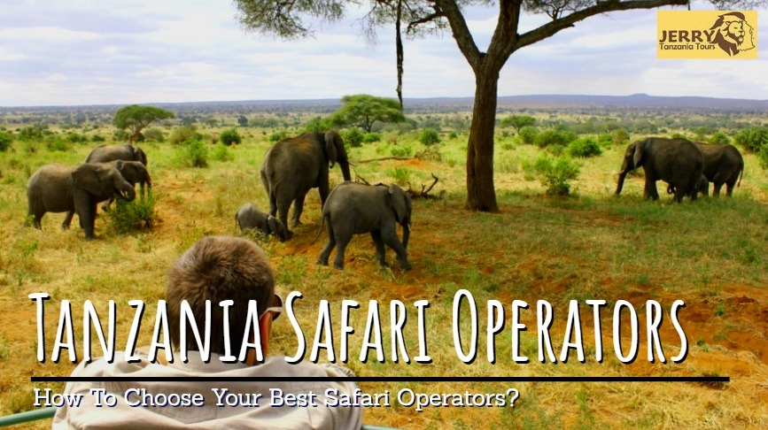 How To Choose Your Best Tanzania Safari Operator & Why Its Important