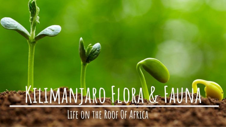 Kilimanjaro Wildlife: LIFE ON kILIMANJARO