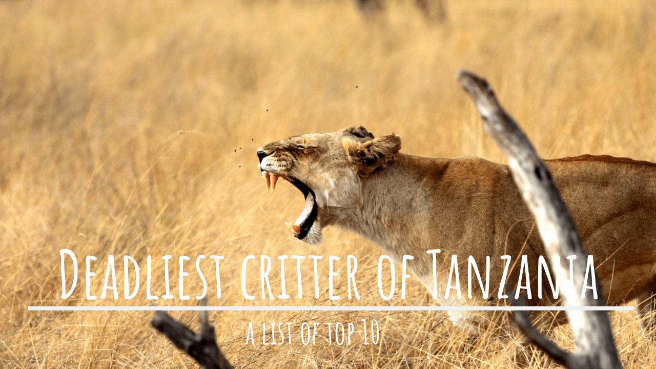 Top 10 Deadliest Critters of Tanzania