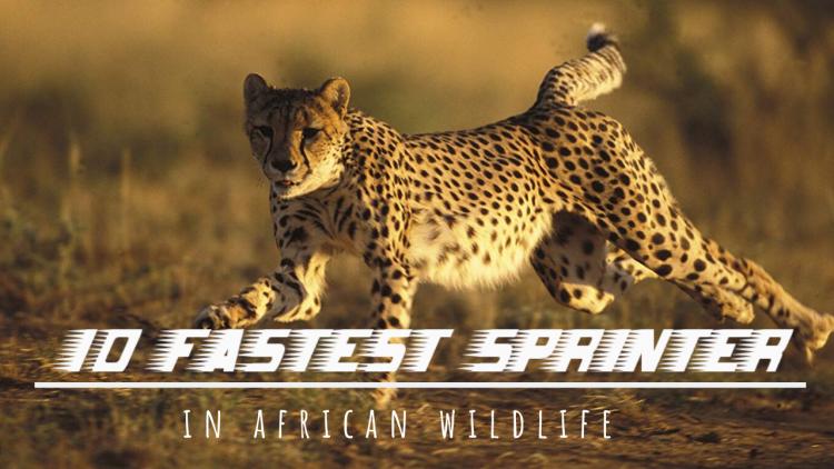 10 fastest animals
