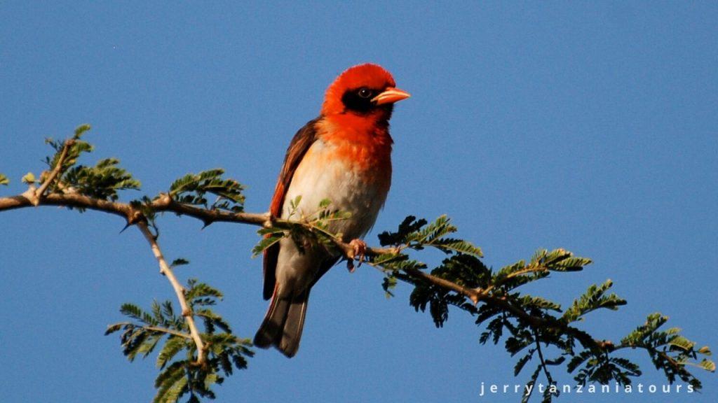 Kilimanjaro Wildlife, Birds in kilimanjaro