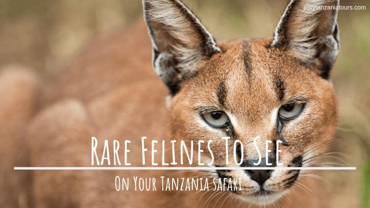 Feline Species List of Tanzania
