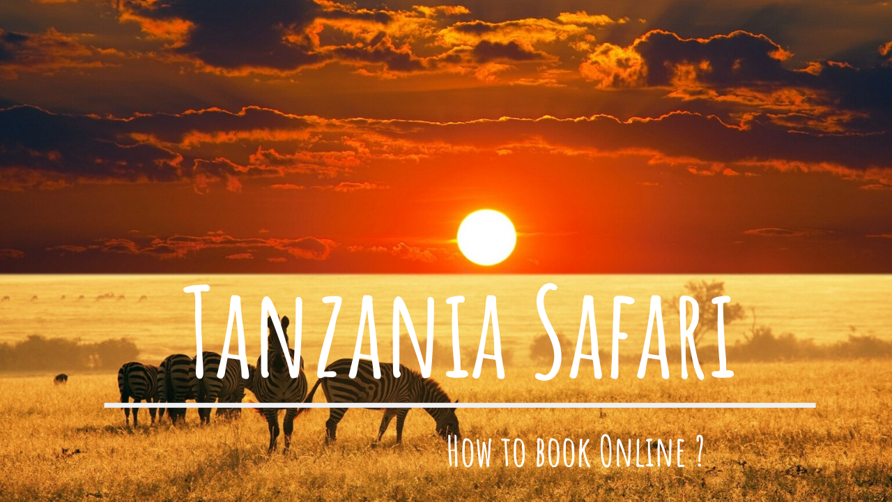 How To Book Tanzania Safari Online? (Step By Step Process)