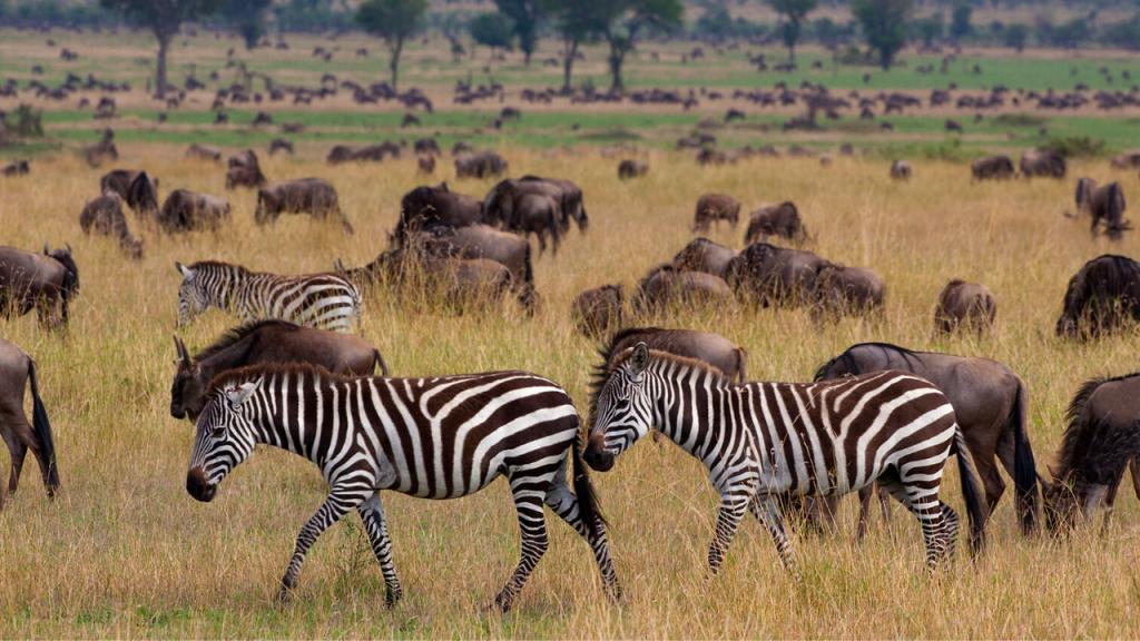 Serengeti Animals