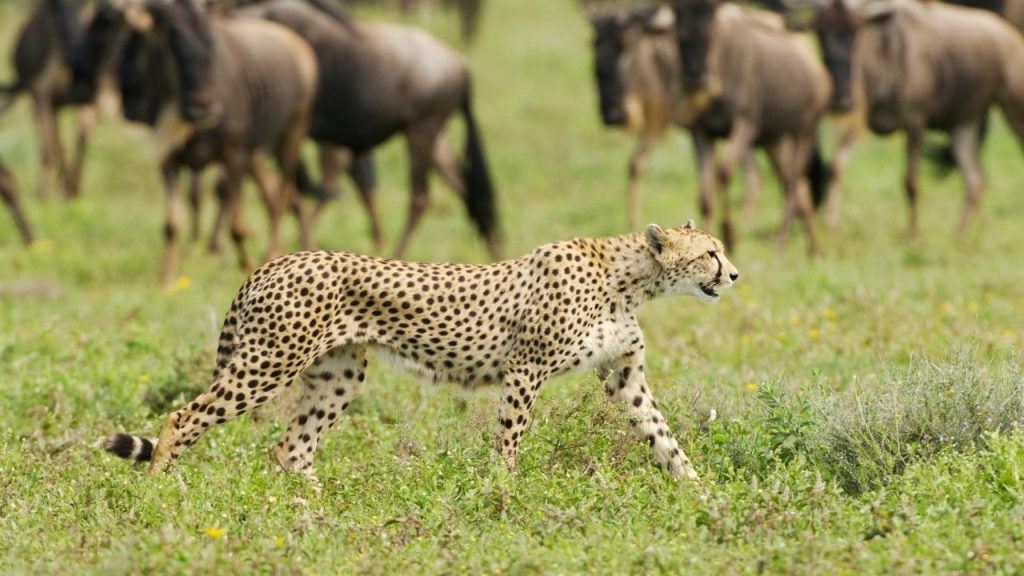 Nature and Wildlife of Tanzania