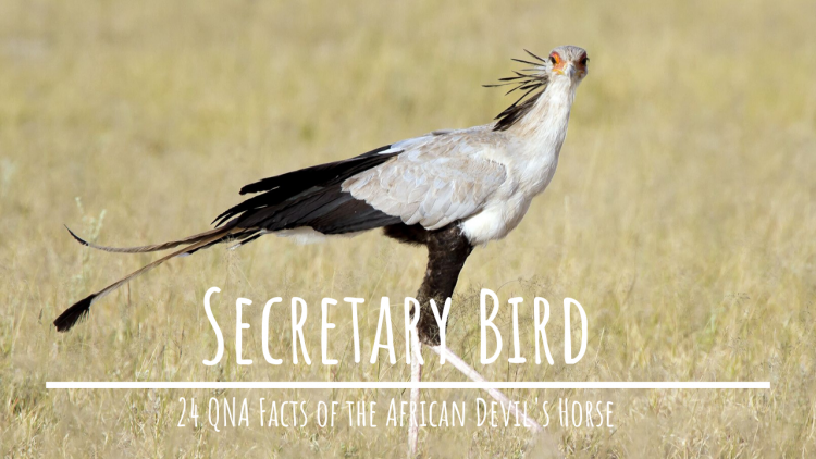 Facts About Secretary Bird