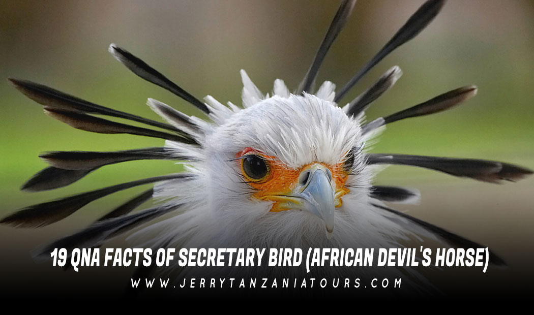 19 QnA Facts of the Secretary Bird (African Devil's Horse)