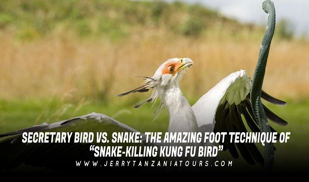"Secretary Bird vs. Snake: The Amazing Foot Technique of ""Snake-Killing Kung Fu Bird"""
