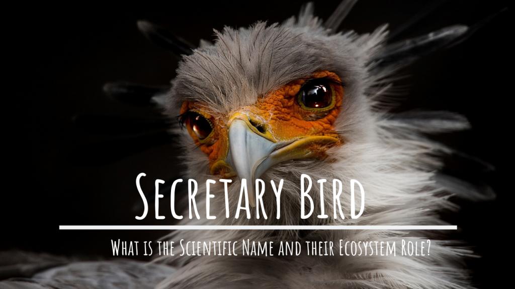 what secretary bird scientific name