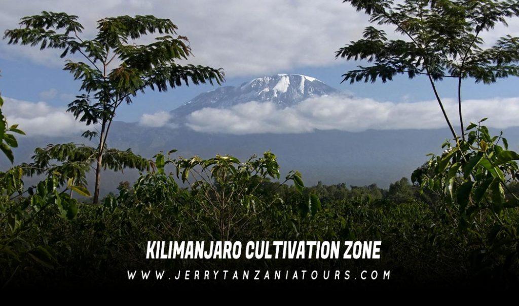 Kilimanjaro Cultivation Zone