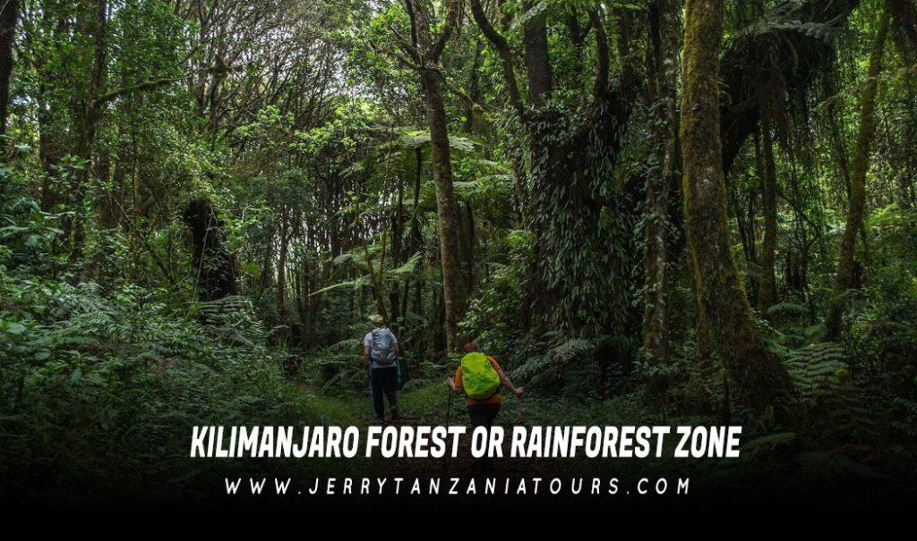 Kilimanjaro Forest Or Rainforest Zone