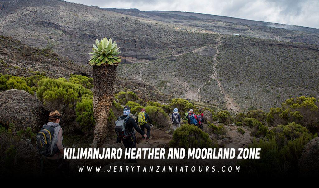 Kilimanjaro Heather And Moorland Zone