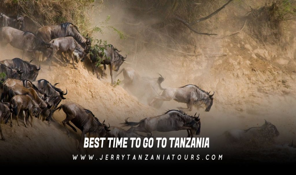 Best Time To Go To Tanzania