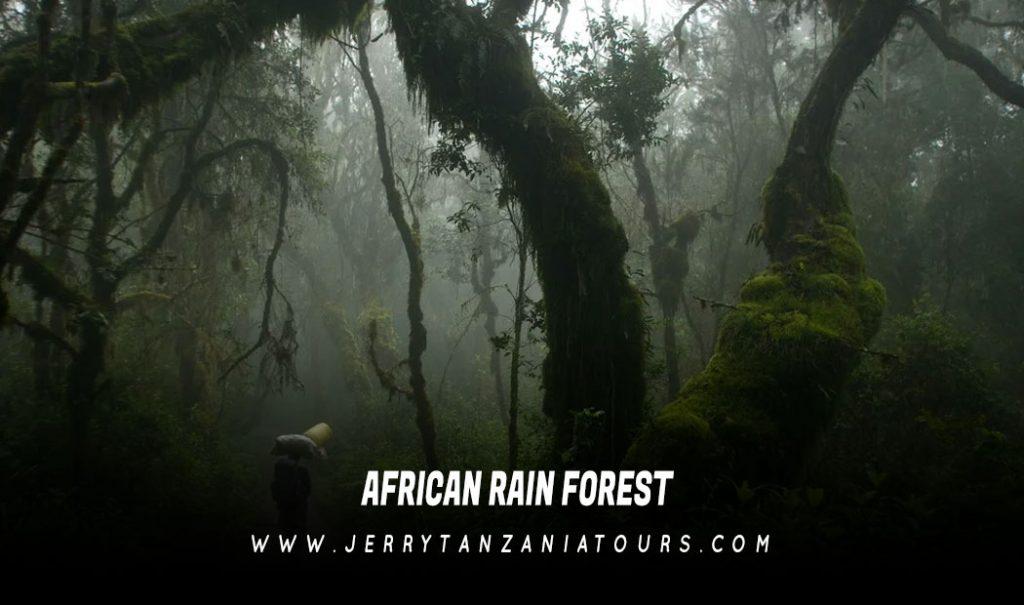 African-Rain-Forest