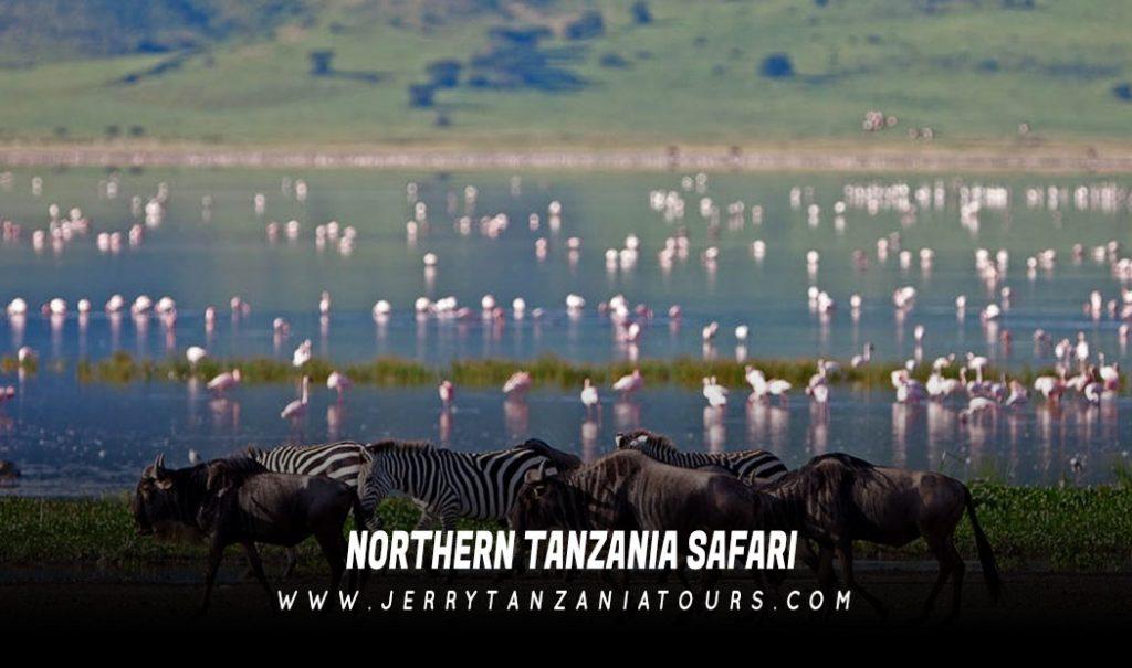 Northern-Tanzania-Safari