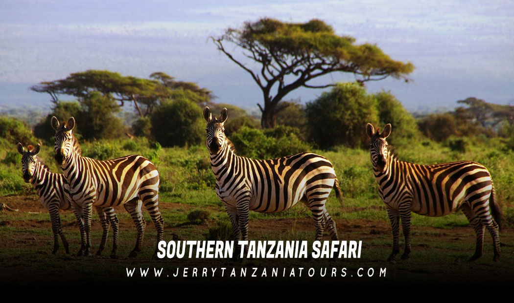 Southern-Tanzania-Safari