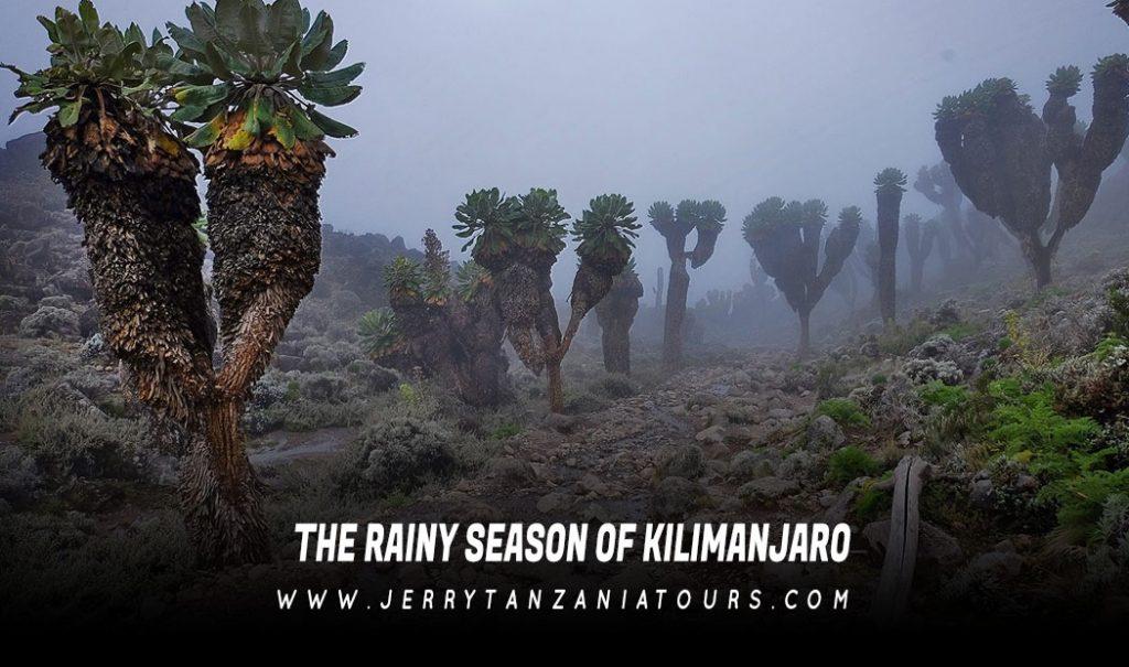 THE-RAINY-SEASON-OF-KILIMANJARO