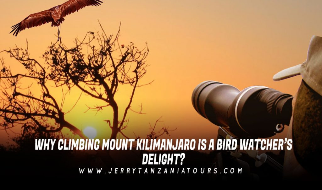 Why-Climbing-Mount-Kilimanjaro-is-a-Bird-Watcher's-Delight
