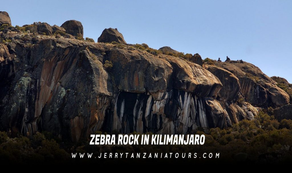 Zebra-Rock-In-Kilimanjaro