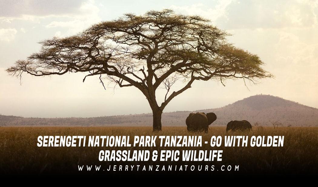 Serengeti National Park Tanzania – Go With Golden Grassland & Epic Wildlife