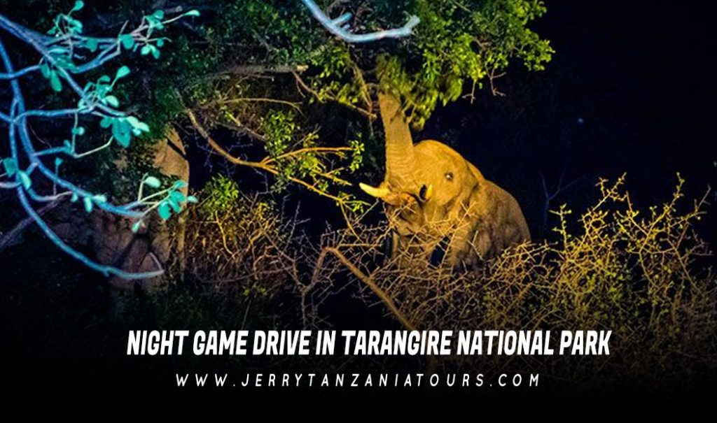 Night Game Drive In Tarangire National Park