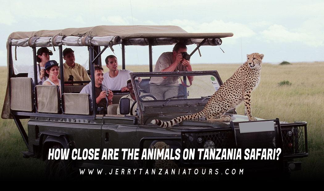 How Close Are The Animals On Tanzania Safari?