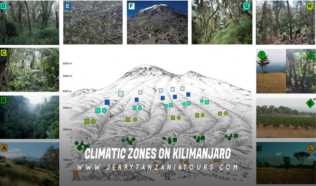 Climatic Zones On Kilimanjaro