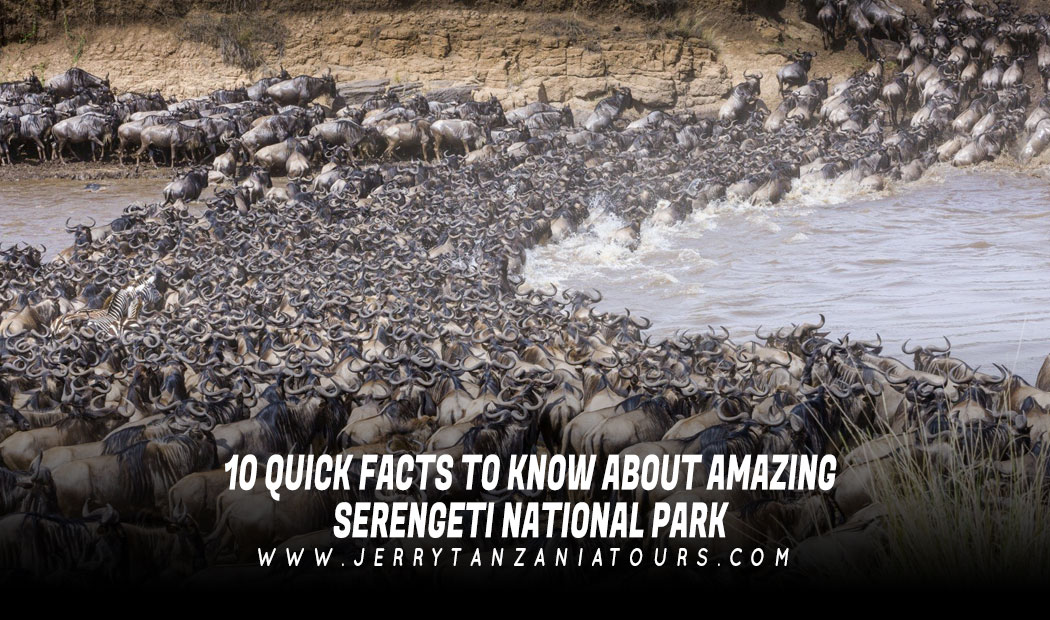 10 Quick Facts to Know About Amazing Serengeti National Park