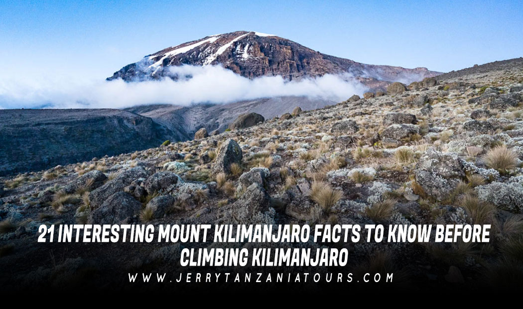 21 Interesting Mount Kilimanjaro Facts To Know Before Climbing Kilimanjaro