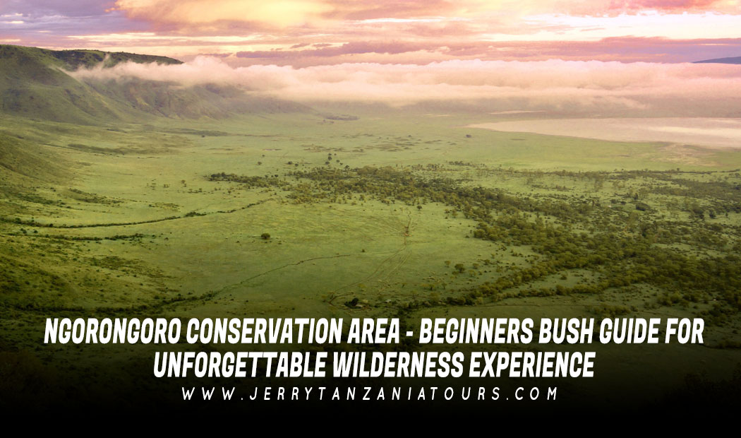 Ngorongoro Conservation Area – Beginners Bush Guide For Unforgettable Wilderness Experience