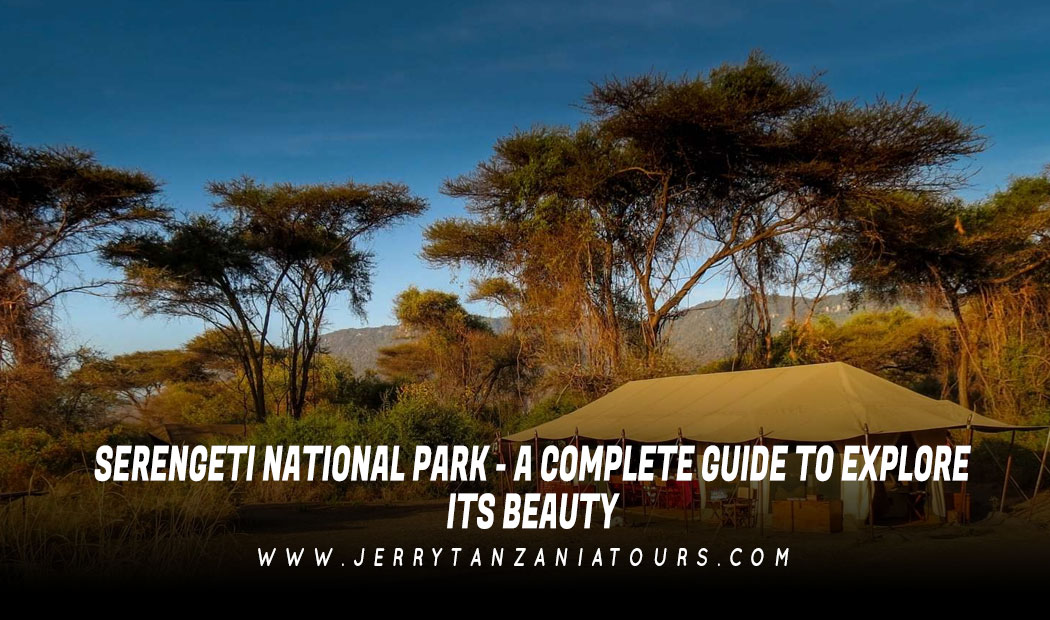 Serengeti National Park – A Complete Guide To Explore Its Beauty