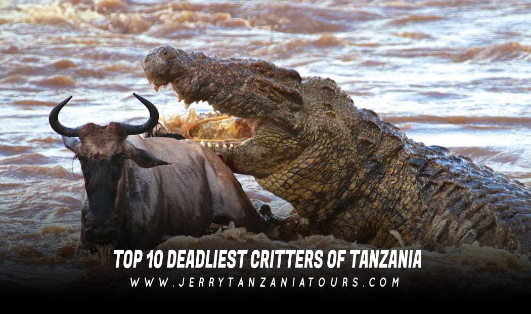 Top 10 Deadliest Critters of Tanzania