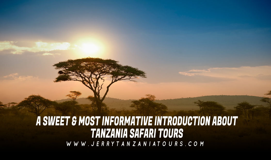 A Sweet & Most Informative Introduction About Tanzania Safari Tours