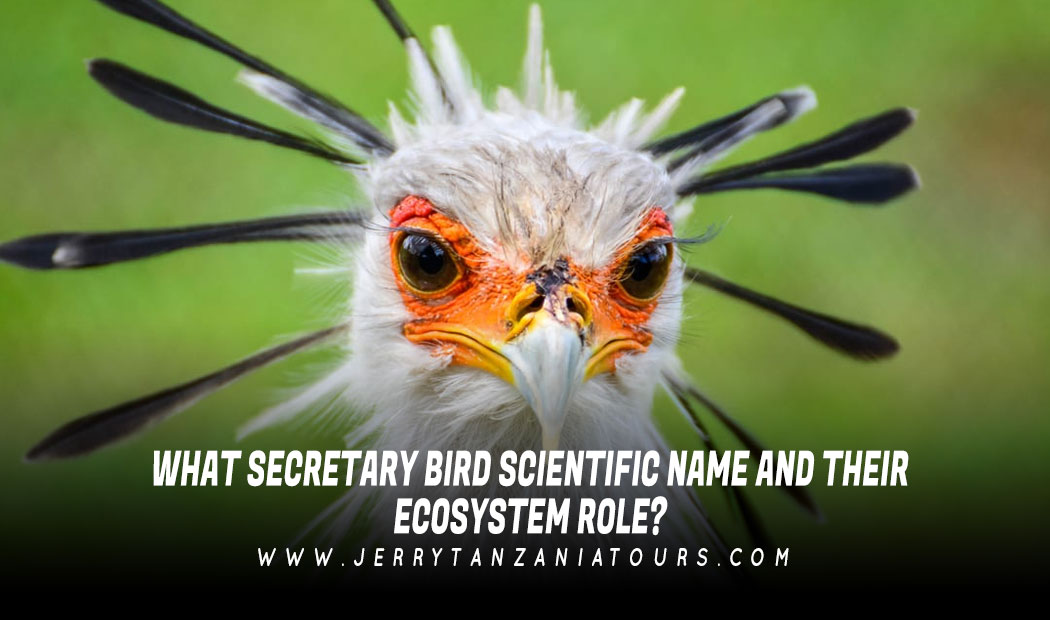 What Secretary Bird Scientific Name and Their Ecosystem Role?