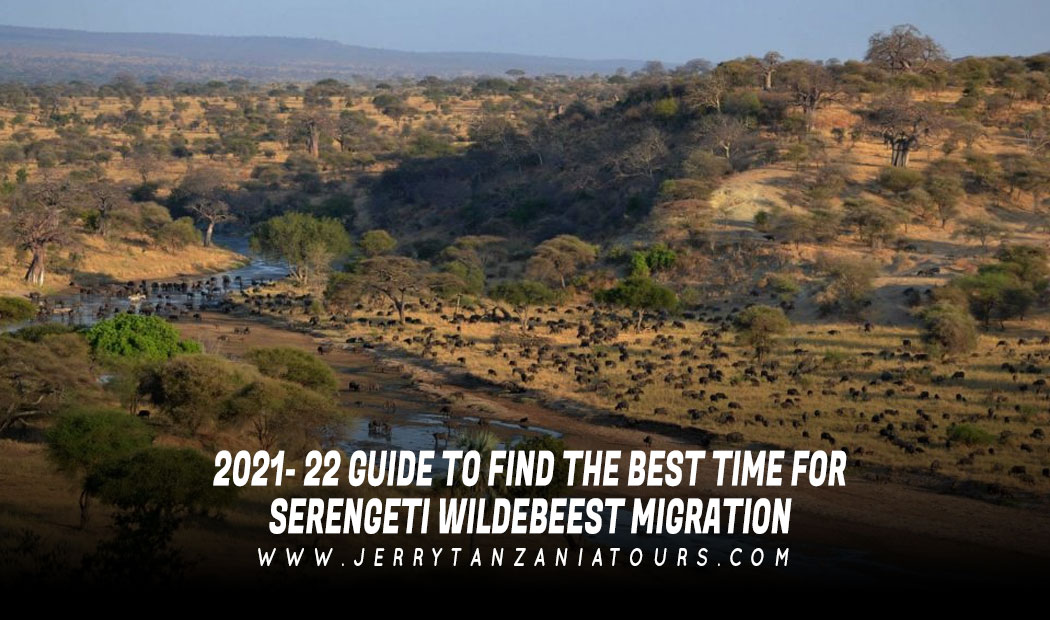 2021- 22 GUIDE TO FIND THE BEST TIME FOR SERENGETI WILDEBEEST MIGRATION