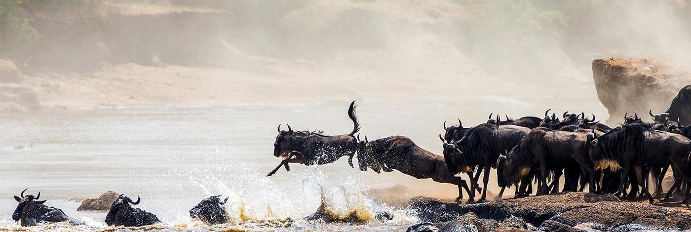 8 Days Great Wildebeest Migration