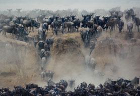 7 Days Great Wildebeest Migration