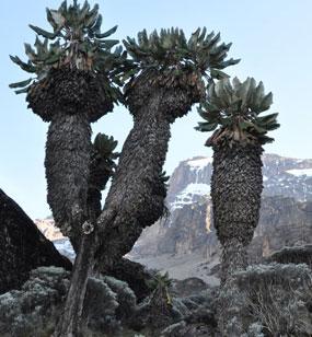 Kilimanjaro Faqs