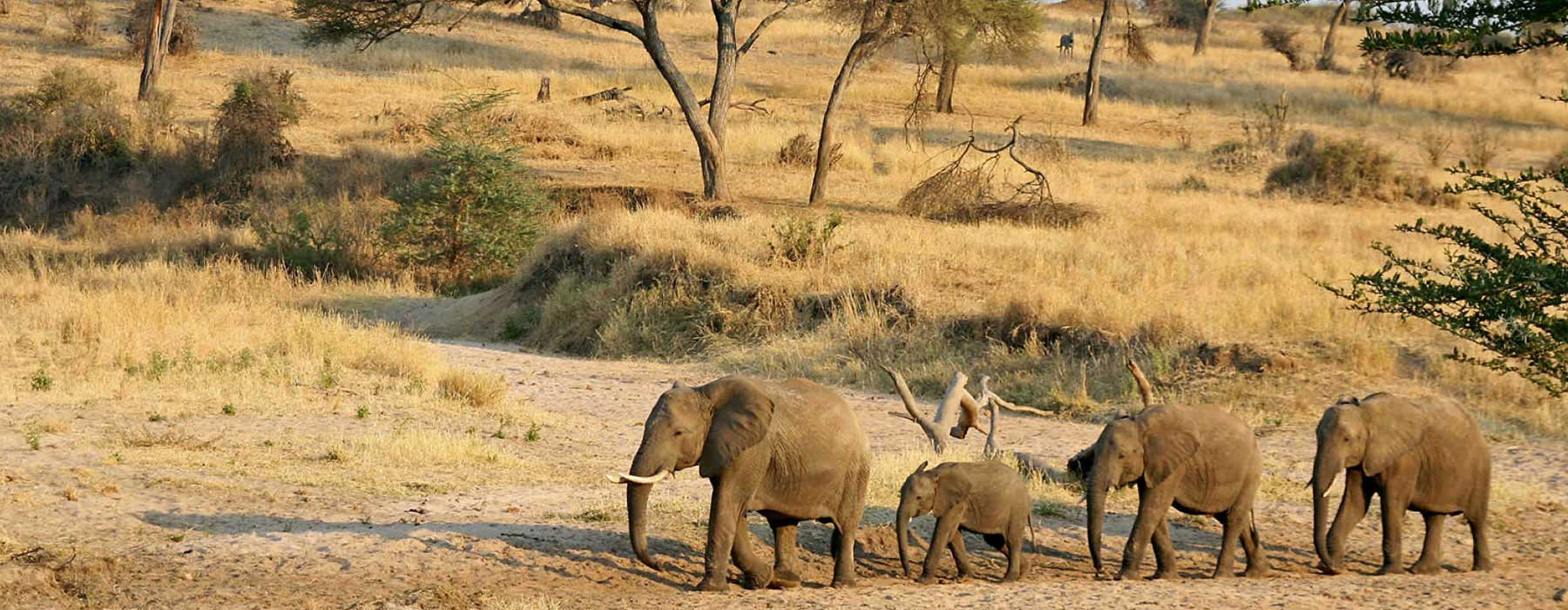 Know About Tanzania Before