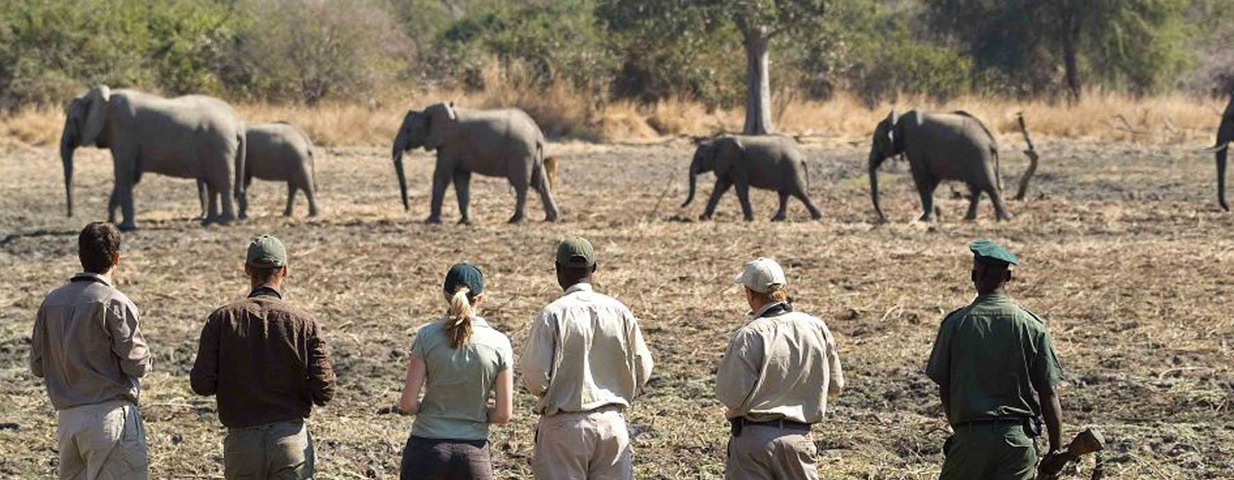 Professional Safari Guides