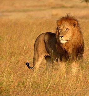 Tanzania Safari Faq's