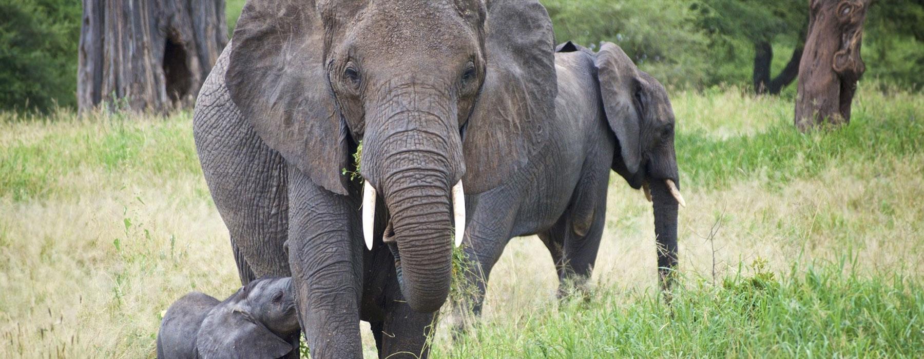 Tanzania Safari Tipping Guide