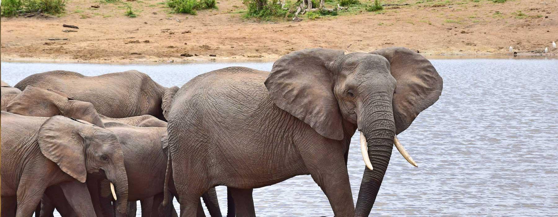 Tanzania Safaris Checklist